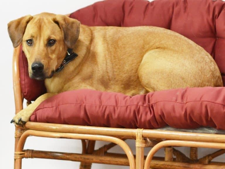 Nacho macht es sich auf einem Sessel gemütlich